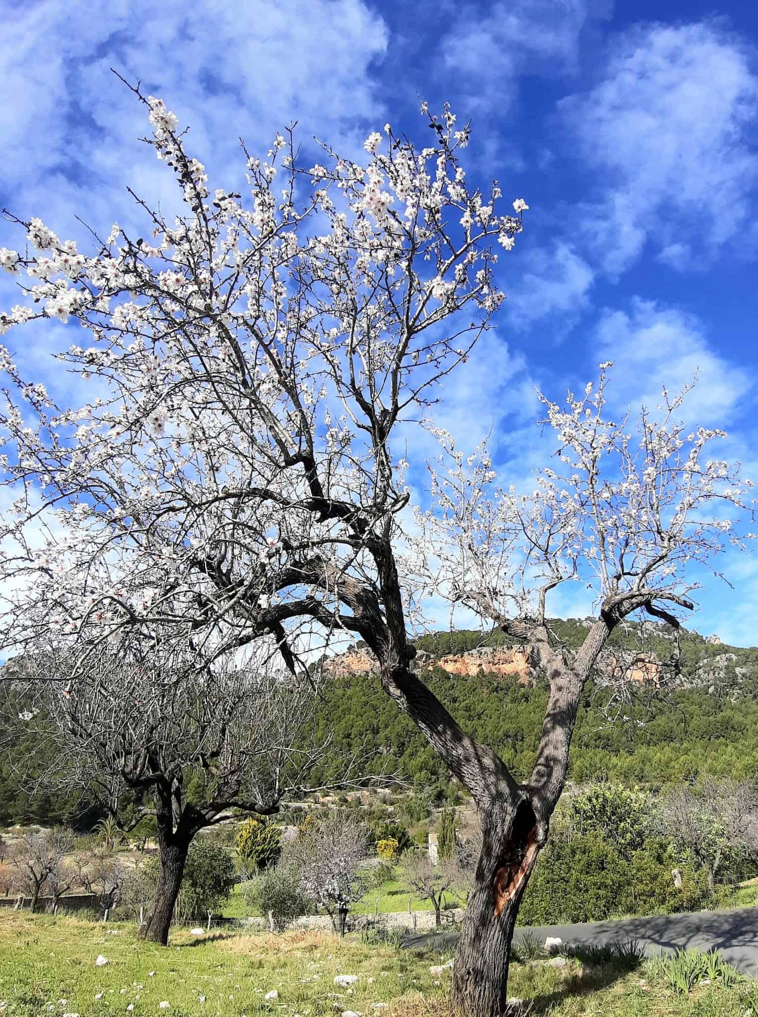 Mallorcan Snow - Balearic Bliss - Villa Rental 5